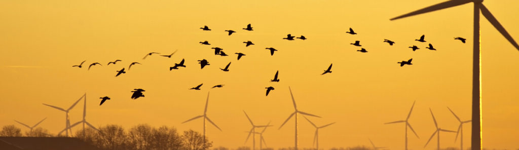 Wind Turbines are Dangerous and Risky to Flying Animals